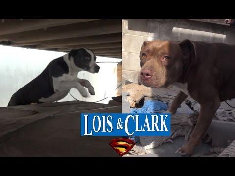 2匹のホームレス犬を保護。不安そうな犬を優しく撫でてあげると・・・。
