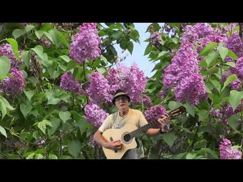 A Mágocsi erdő tele van virággal