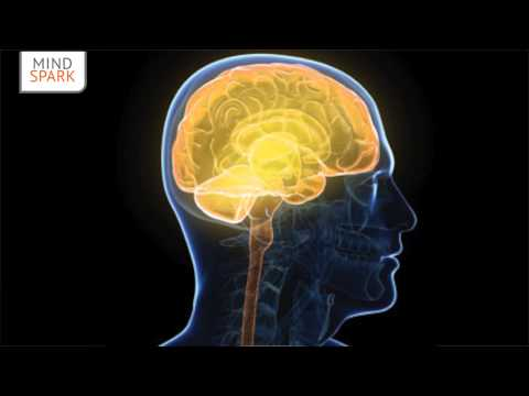 Training Your Nervous System | Dec. 3, 2012 | The Spark with Adam Hergenrother | Mind Spark Image 1