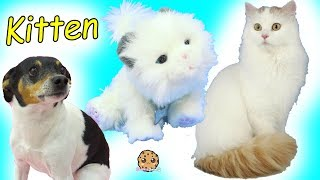 Cute Cat Little Live Pets Cuddles My Dream Kitten - Cookie Swirl C Video