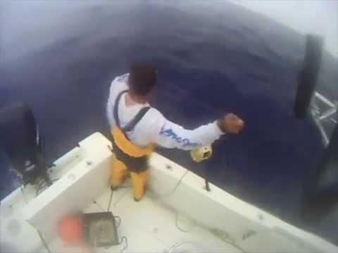 swordfish attack and killed