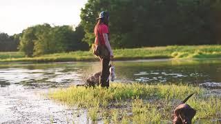 Dog Training: Using Cornerstone Gundog Academy Training Methods