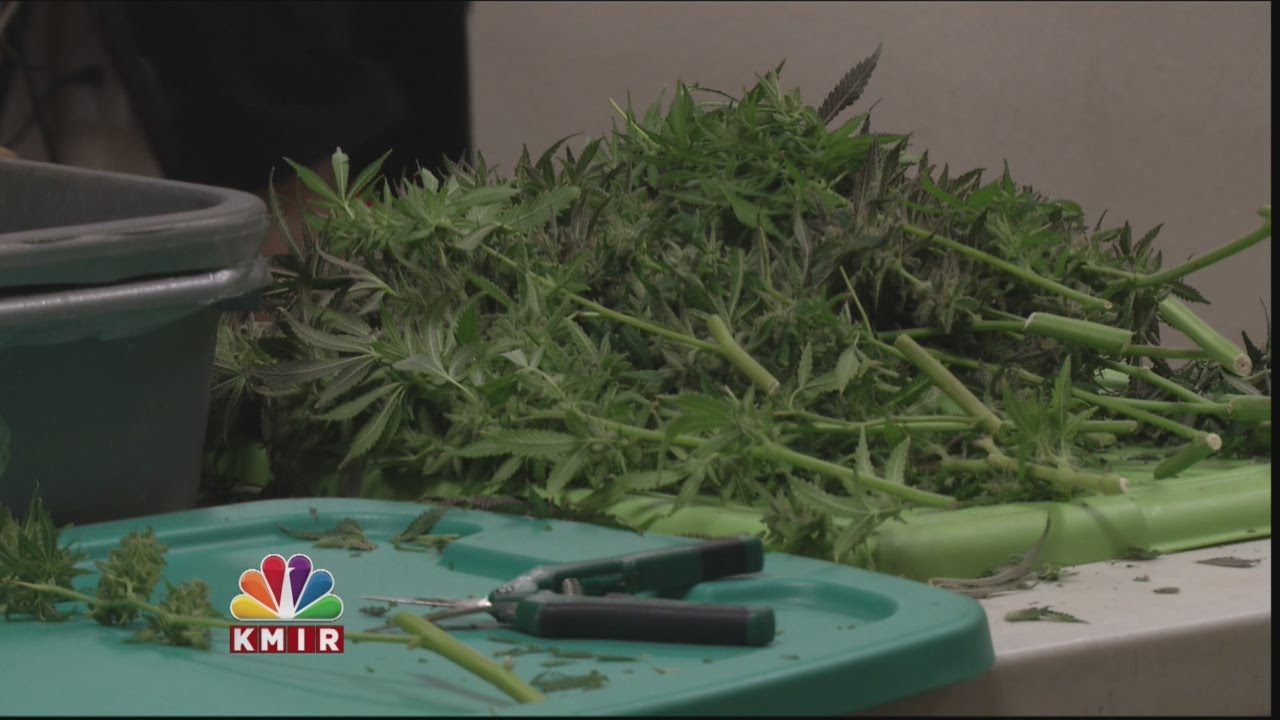 Recreational Marijuana: New Rules to Know