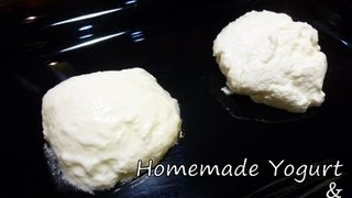 Cooking | Homemade Yogurt Homemade Greek Yogurt Recipe | Homemade Yogurt Homemade Greek Yogurt Recipe