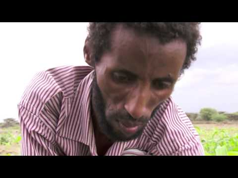 In the words of family farmers: Ethiopia