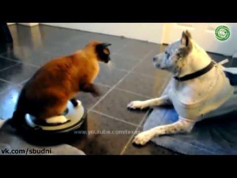 Собачьи Будни - 31. Кот вооружился роботом-пылесосом и атакует собаку