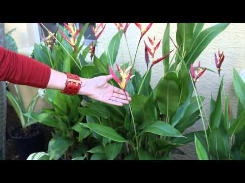 How to Landscape a Small, Front Tropical Garden : Landscaping & Floral Decor