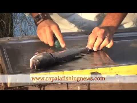 How To Fillet A Fish With A Marttiini Knife