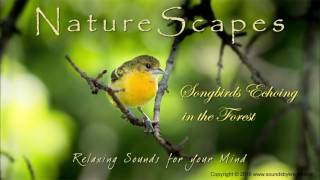 Birds Singing In The Forest Relaxing Sounds Of Songbirds And Water To Help Sleep Study