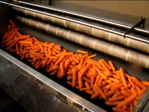 Оборудование для выращивания моркови 96