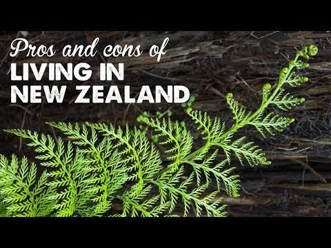 Pros & Cons of Living in New Zealand   A Thousand Words