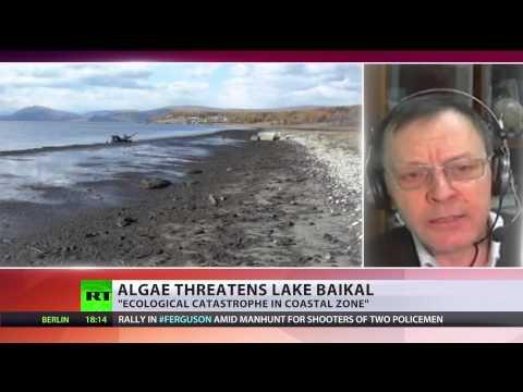 World's deepest lake Baikal suffers alien algae. record water-level drop