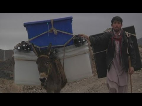 Afghanistan Election: Donkeys carry ballot boxes to villages