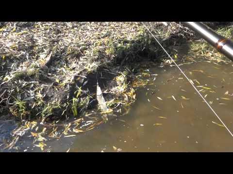 рыбалка в подмосковье видео воскресенск