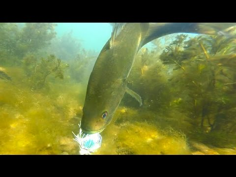 Largemouth bass fishing with underwater slow motion for Bed fishing for bass