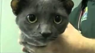 The 10 Most Inspiring Deformed Animals