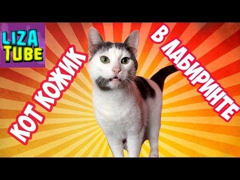 Лабиринт #6 для кошек 😺 Коржик проходит новый лабиринт 😂 на канале lizatube