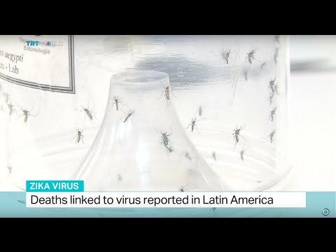 Deaths linked to Zika virus reported in Latin America