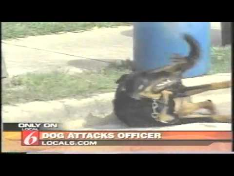 Dog attacks Police Officer Taser Full News Report