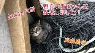 野良子猫ちゃん。うちの子1日目。【はちの成長記録#1】