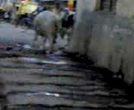 Pollution and Cows in Bangalore