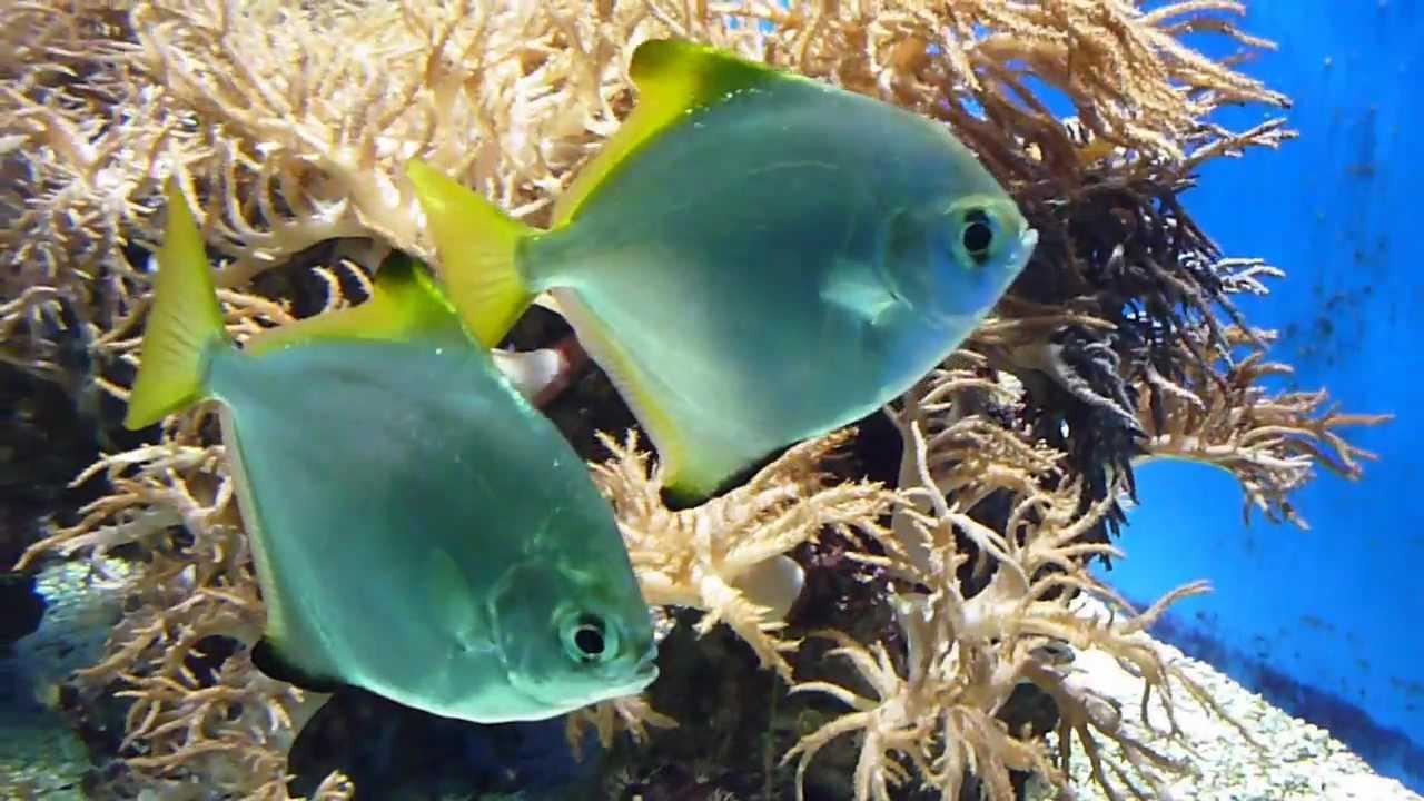 Fische im zoo aquarium osnabr ck youtube for Fische aquarium