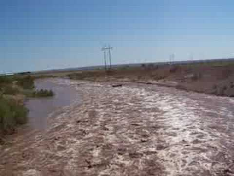 Flash Flooding 9 S Artesia, NM #3-Cow Swept Downstream