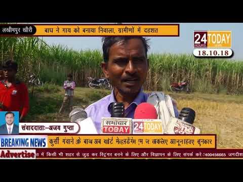 24hrstoday Breaking News:- बाघ ने गाय को बनाया निवाला Report by Ajay Gupta