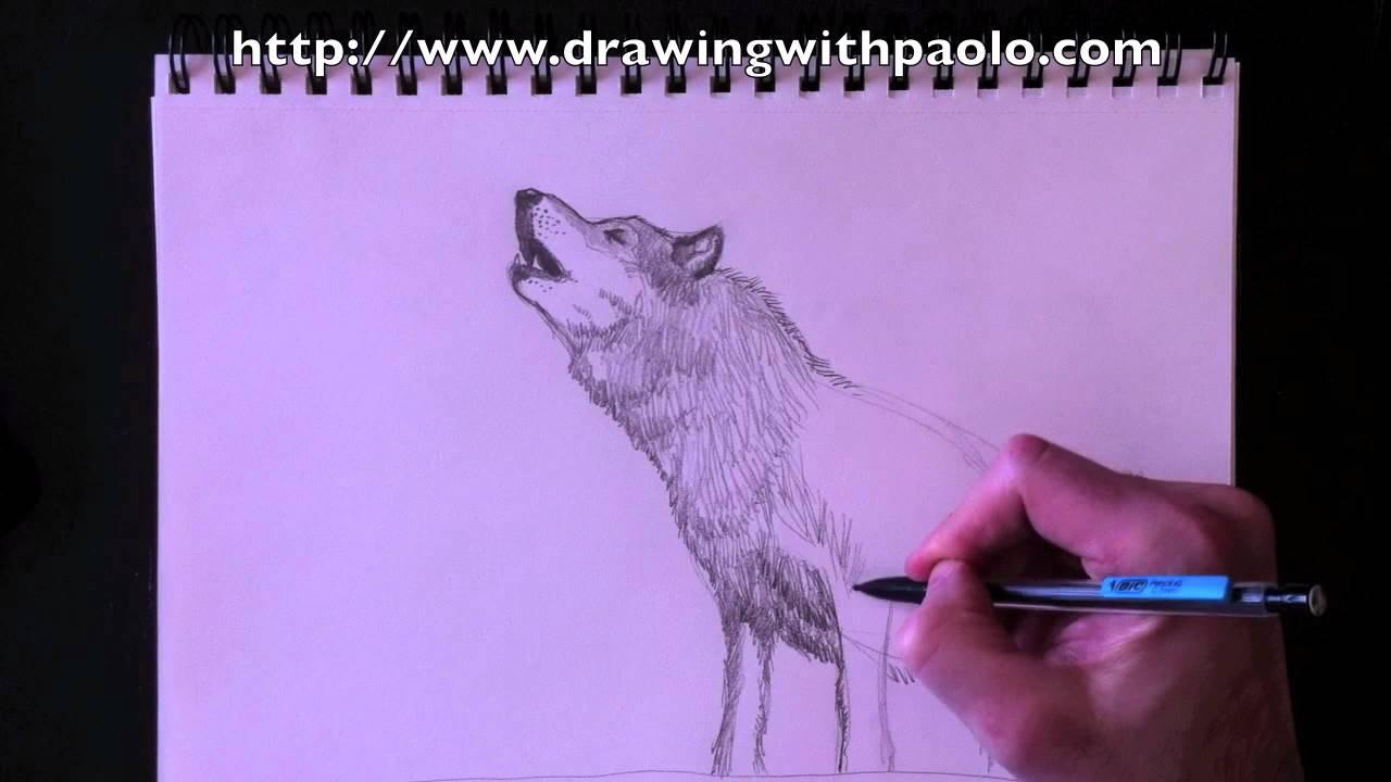 Dessiner un loup avec paolo morrone youtube - Un loup dessin ...
