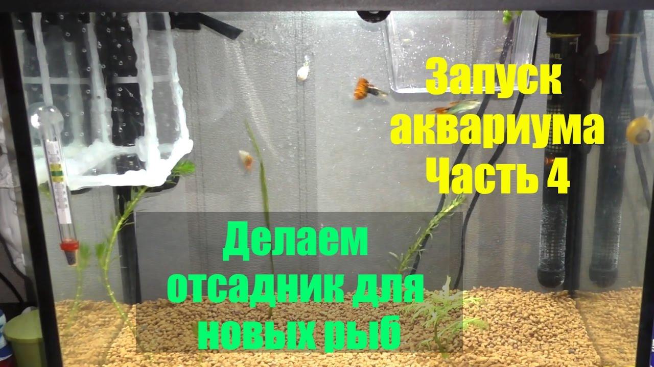 Отсадник в аквариум своими руками 921