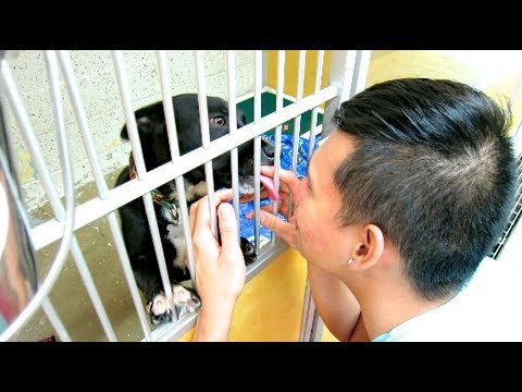 Visiting the Shelter! (CAUTION: CUTE ANIMALS)