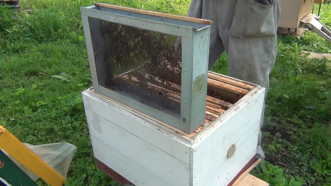 Как сделать матку для пчел 26