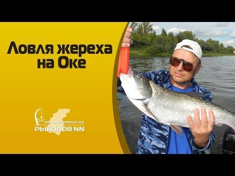 рыбалка под молитовским мостом