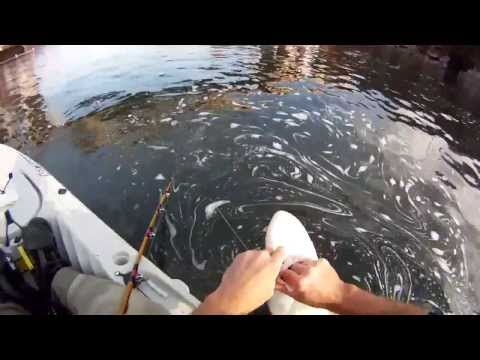 Kayak fishing the Willamette River for Sturgeon