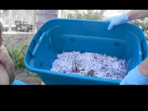 How-To Compost with Worms and Solve Common Problems