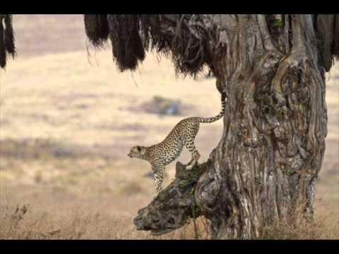 Natureza Selvagem Trailer da Natureza Selvagem