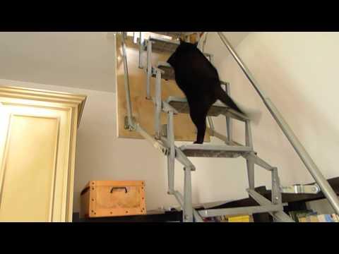 尻尾を回す姿がカワイイ!一生懸命はしごを登る猫