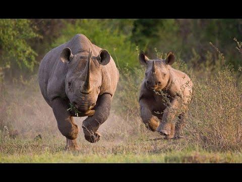 Kenya's Rhino Apocalypse?