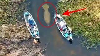 """Penampakan """"Ikan Purba"""" yang Sempat Gegerkan Dunia, ternyata begini bentuk aslinya😲"""