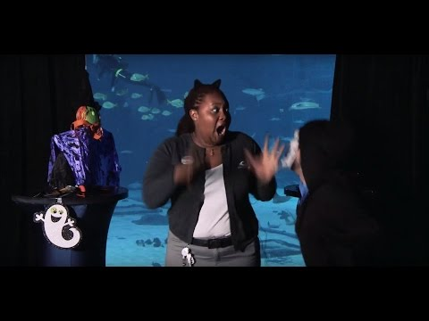 Georgia Aquarium Staff Get Spooked for Halloween!