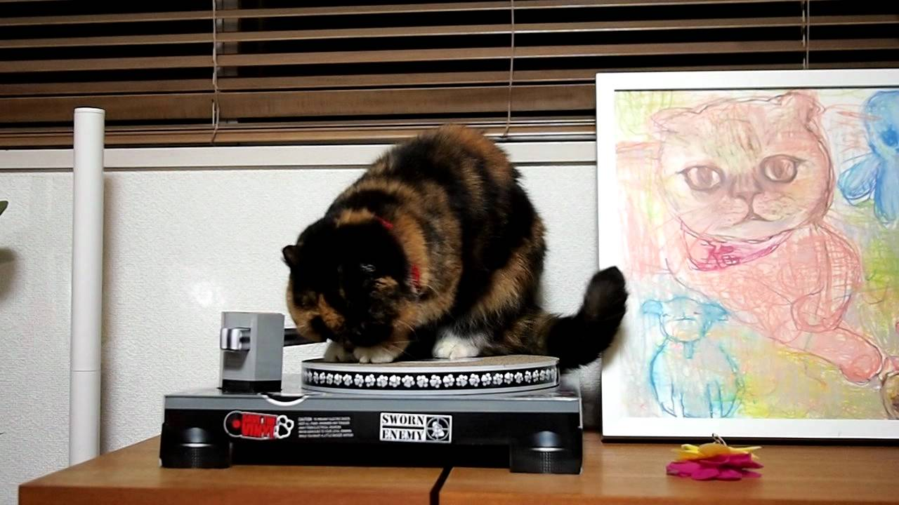 Goma plays Cat Scratch Turntable ♪ - YouTube