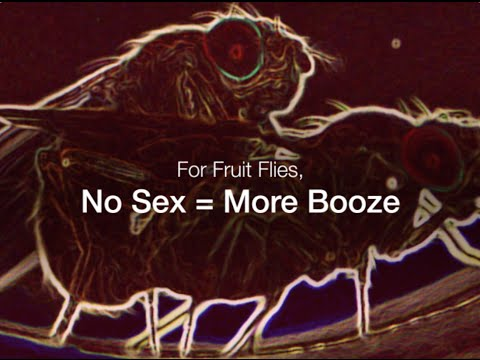 Sexual Rejection Leads to Binge Drinking in Fruit Flies