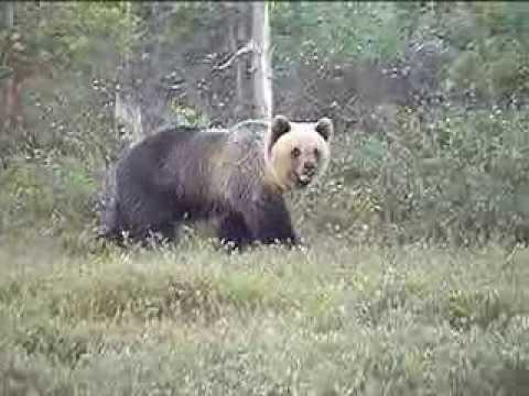 ХМАО Радужный  Добрый медведь