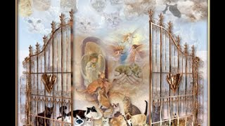 Sunday Sermon: What Happens 2 Pets @ Rapture? Will Our Pets Be In Heaven/New Earth?