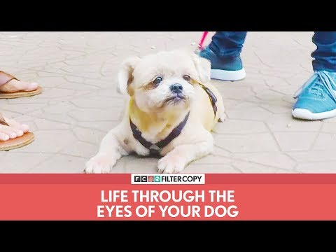 FilterCopy   Life Through The Eyes Of Your Dog   Ft. Rohan Khurana thumbnail
