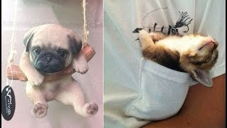 Cute baby animals Videos Compilation cute moment of the animals - Soo Cute! #35