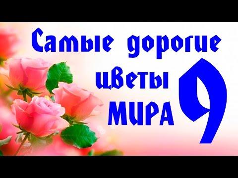 Vzglyad: 9 САМЫХ ДОРОГИХ ЦВЕТОВ В МИРЕ!