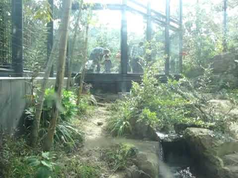 石川動物園 トラ 2