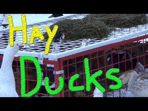 Really Early Morning Rush #48 Winter Duck Adventure