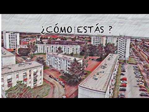 Dingo - COMO ESTAS
